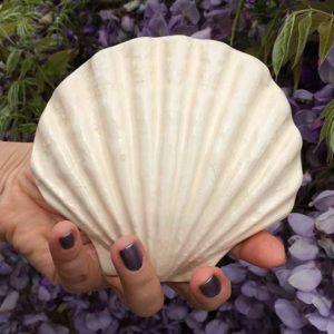 Acheter la coquille saint-jacques et ses vertus énergétiques